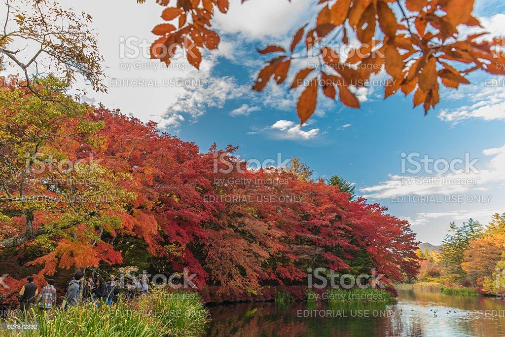 Autumn colours pond stock photo