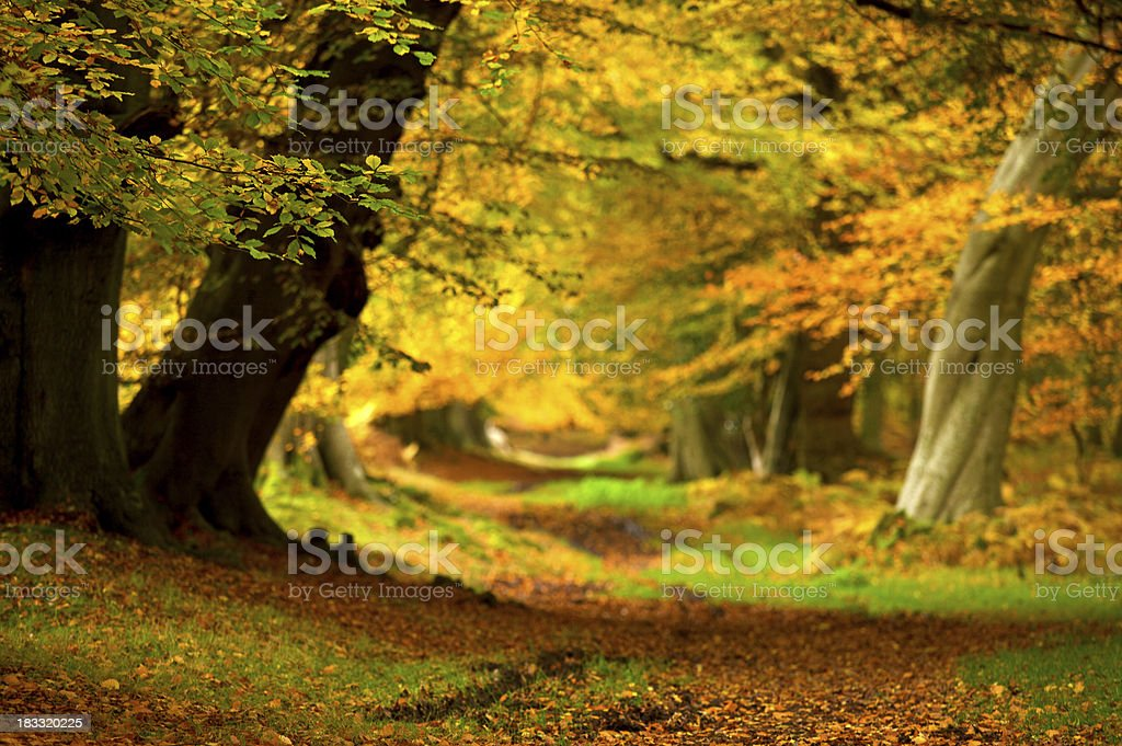 Autumn colours with soft focus stock photo
