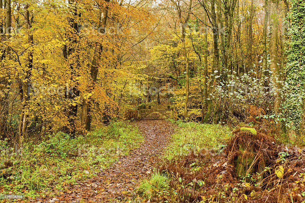 Autumn colours, woodland walk, November 2013 stock photo