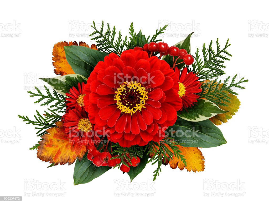 Autumn composithion with zinnia flowers stock photo