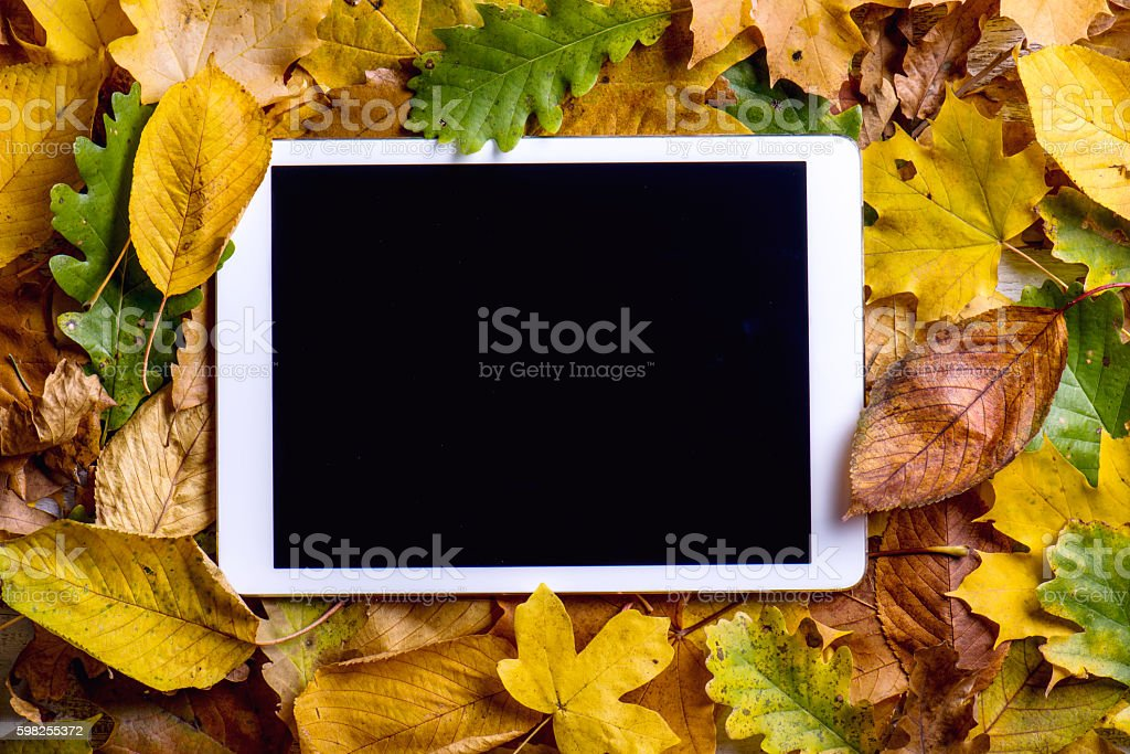 Autumn composition. Colorful leaves and tablet. Studio shot stock photo