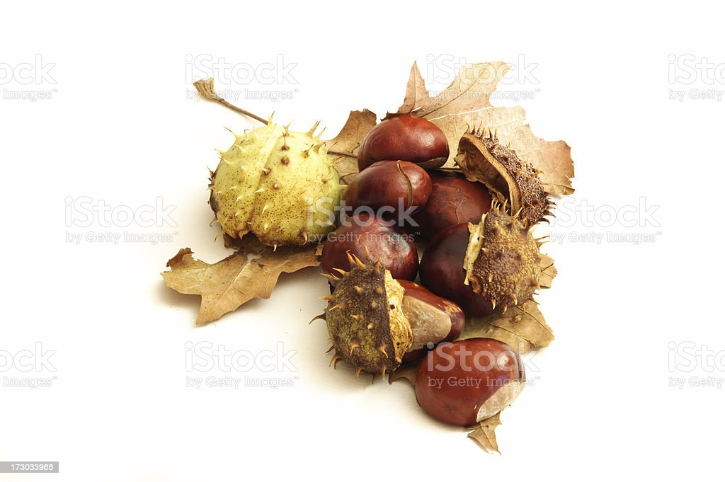 Autumn composition Leaf and chestnuts royalty-free stock photo