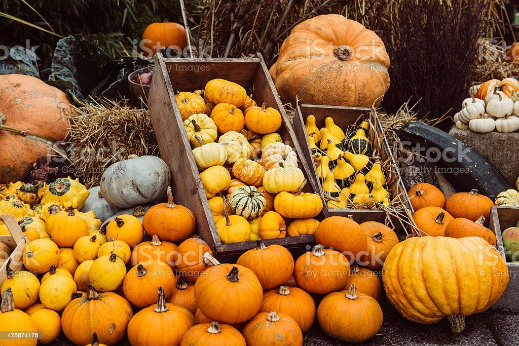 Autumn composition with pumpkins stock photo