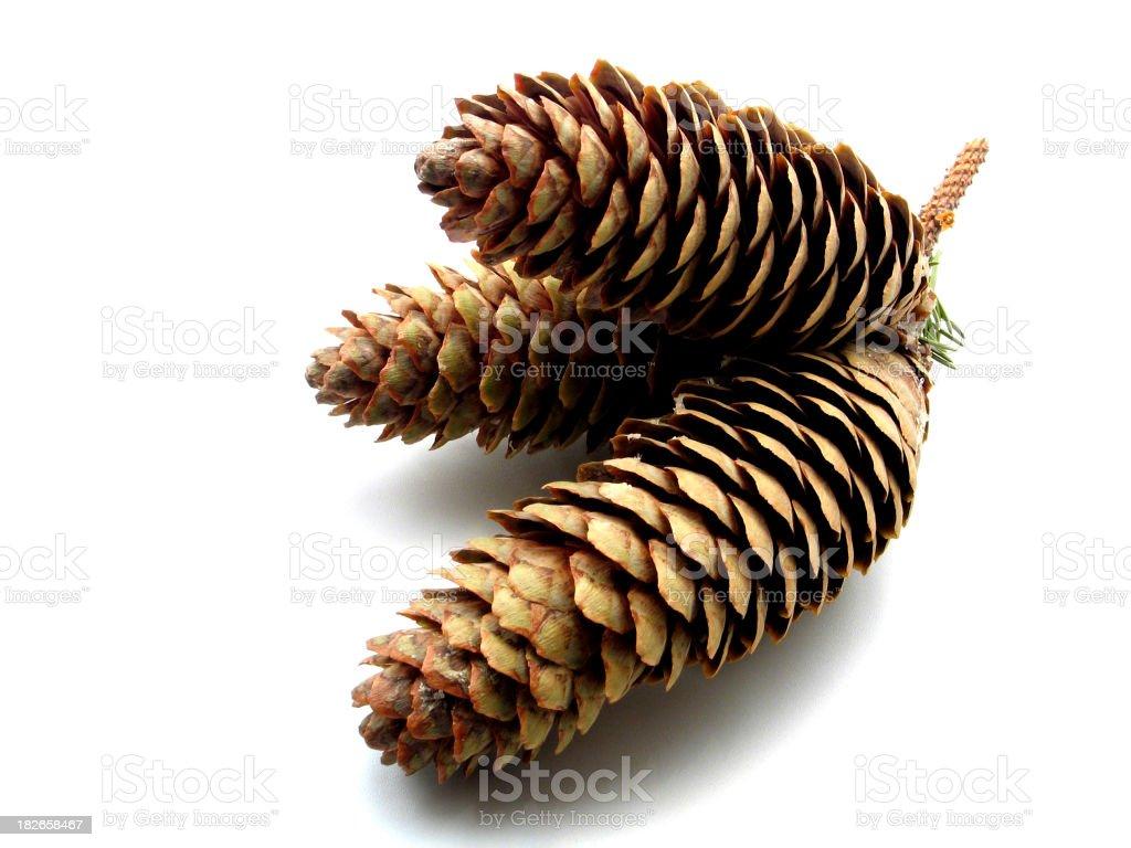 Autumn Cones 2 royalty-free stock photo