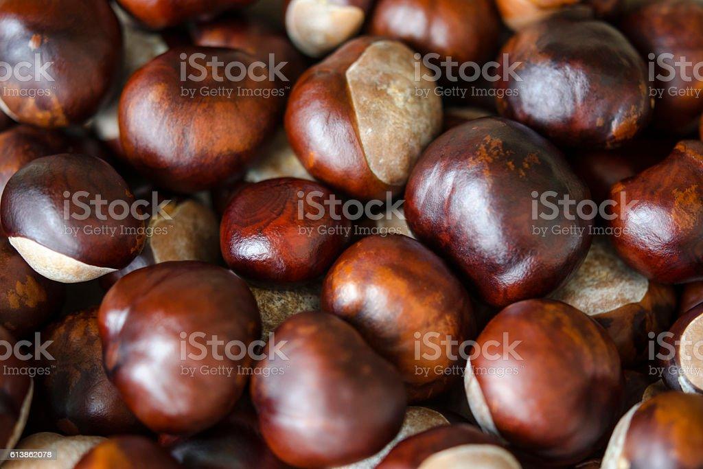 Autumn conkers stock photo
