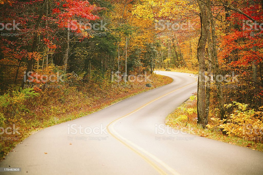 Autumn Country Road in the Forest royalty-free stock photo