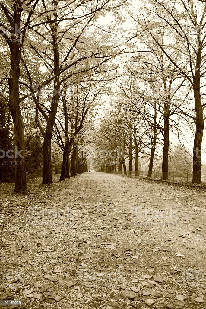 Autumn countryroad royalty-free stock photo