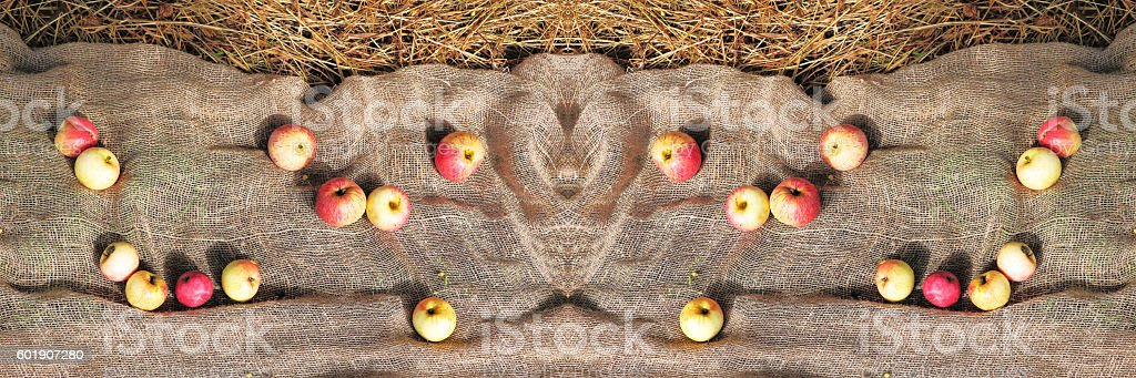Autumn countryside background - organic apples on burlap textile. Wide stock photo