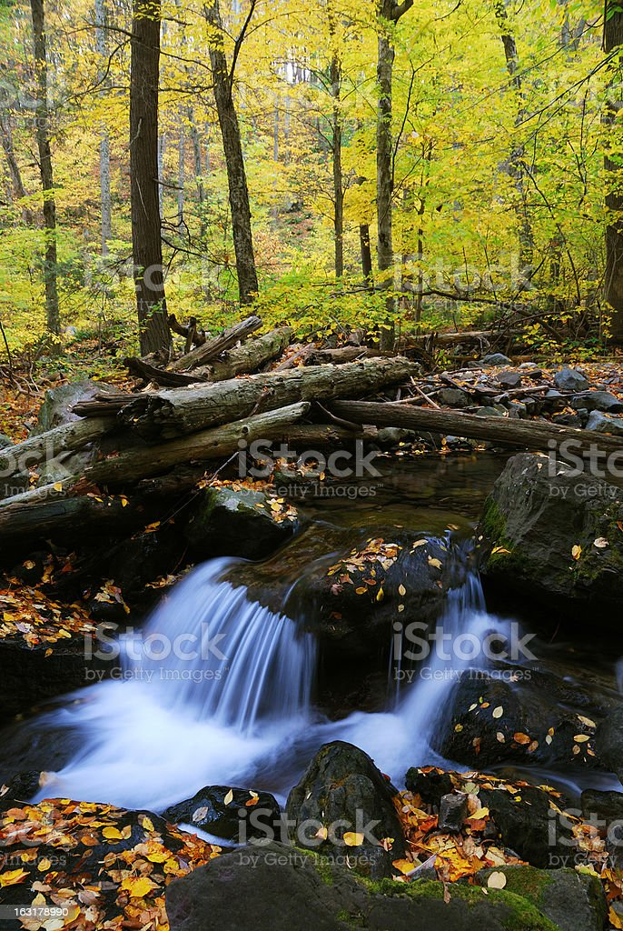 Autumn creek closeup in forest royalty-free stock photo