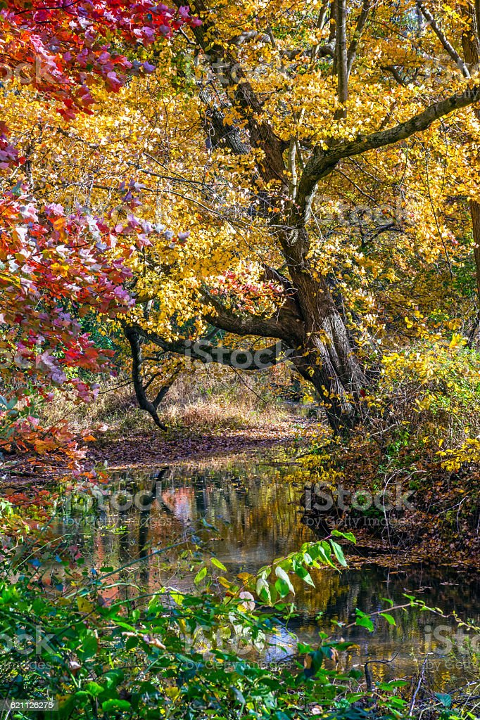 Autumn Creek in the Woods stock photo