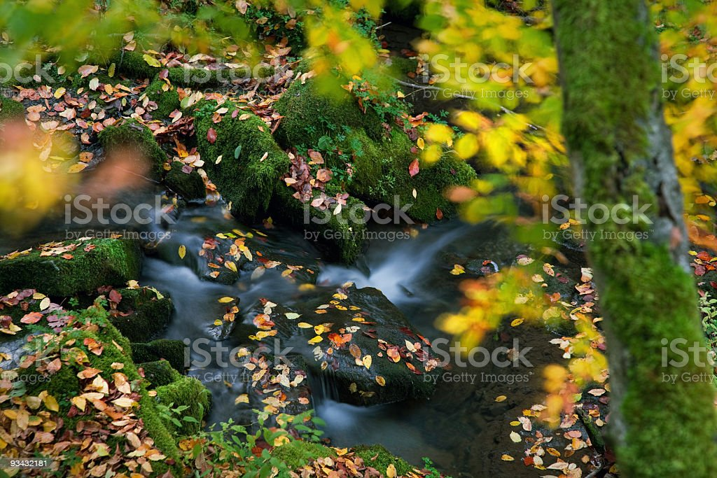 Autumn creek scene royalty-free stock photo