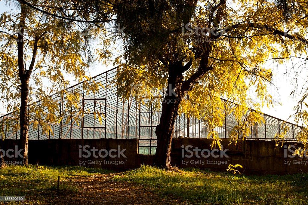 autumn day. royalty-free stock photo