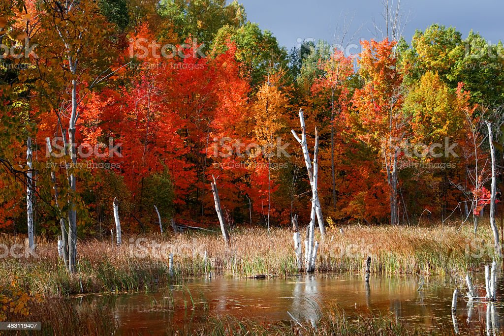 Autumn Day royalty-free stock photo