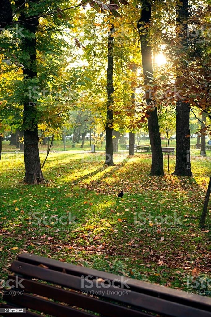 Autumn daylight in central park stock photo