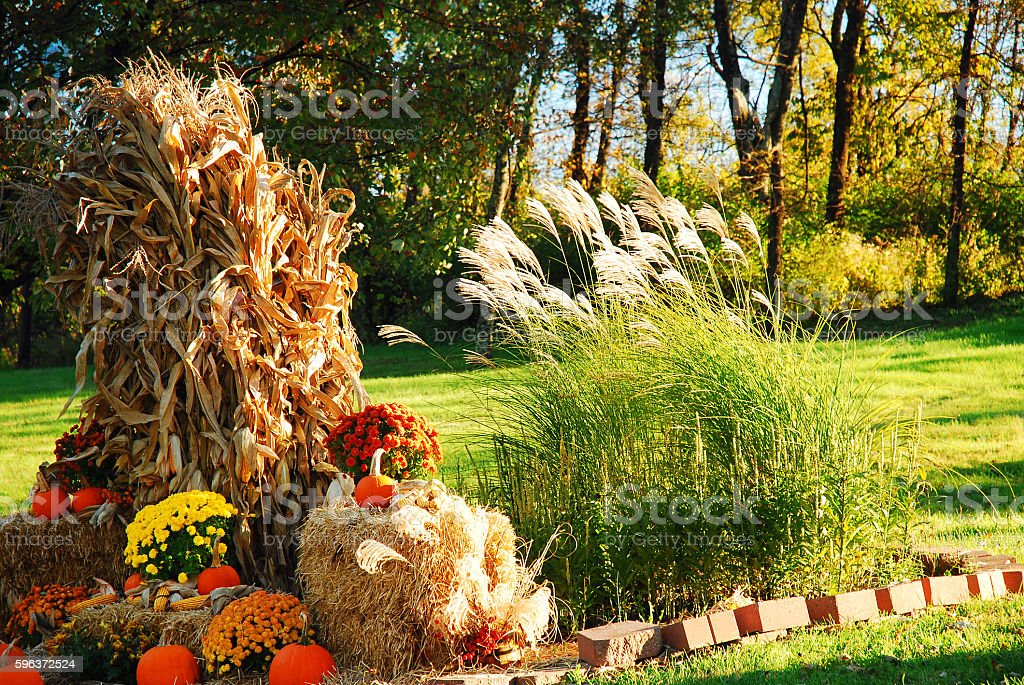 Autumn Decor stock photo