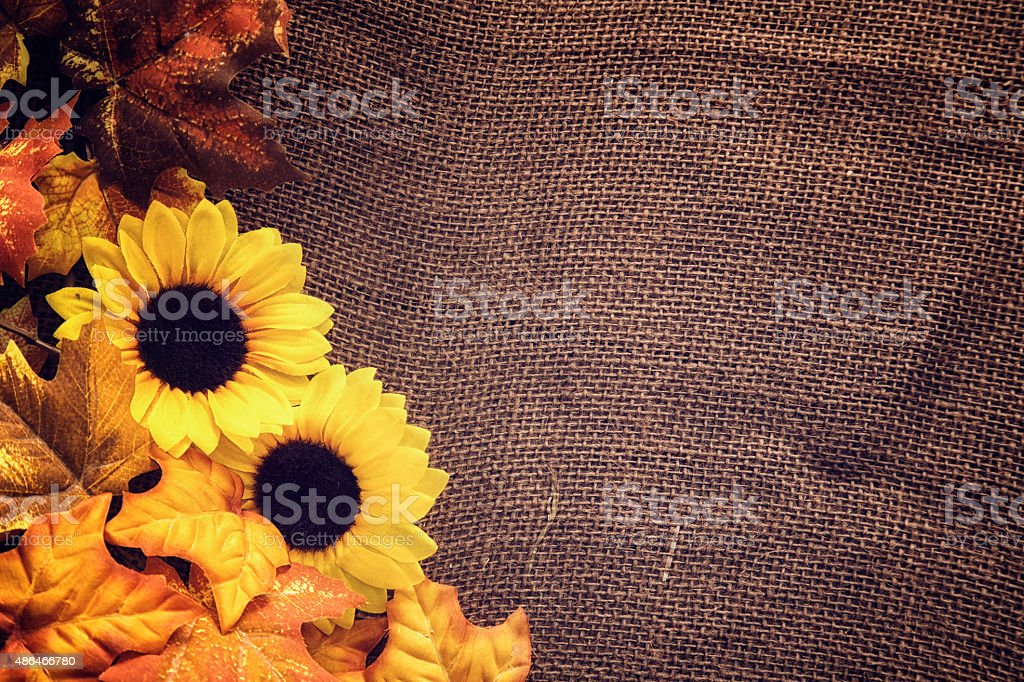 Autumn Decoration Background with Leafs and Sunflowers stock photo