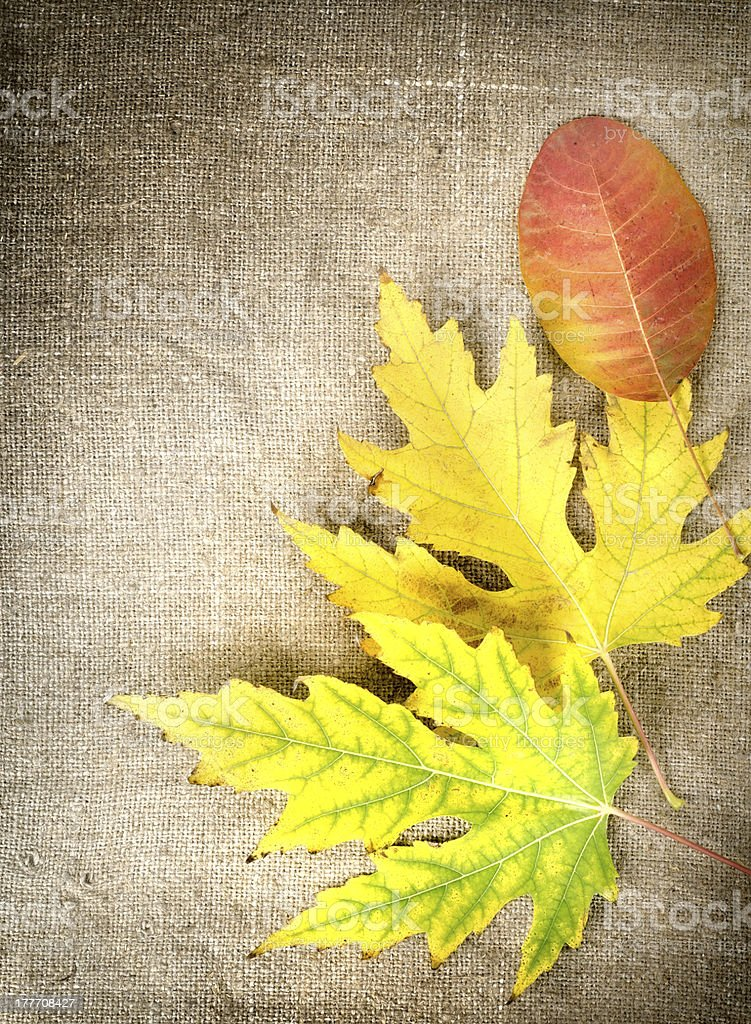 Autumn decoration on a canvas royalty-free stock photo