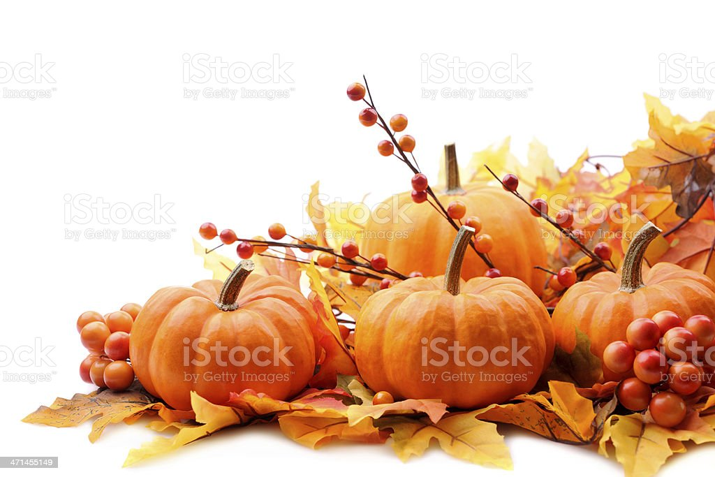 Autumn decoration on white with copy space stock photo