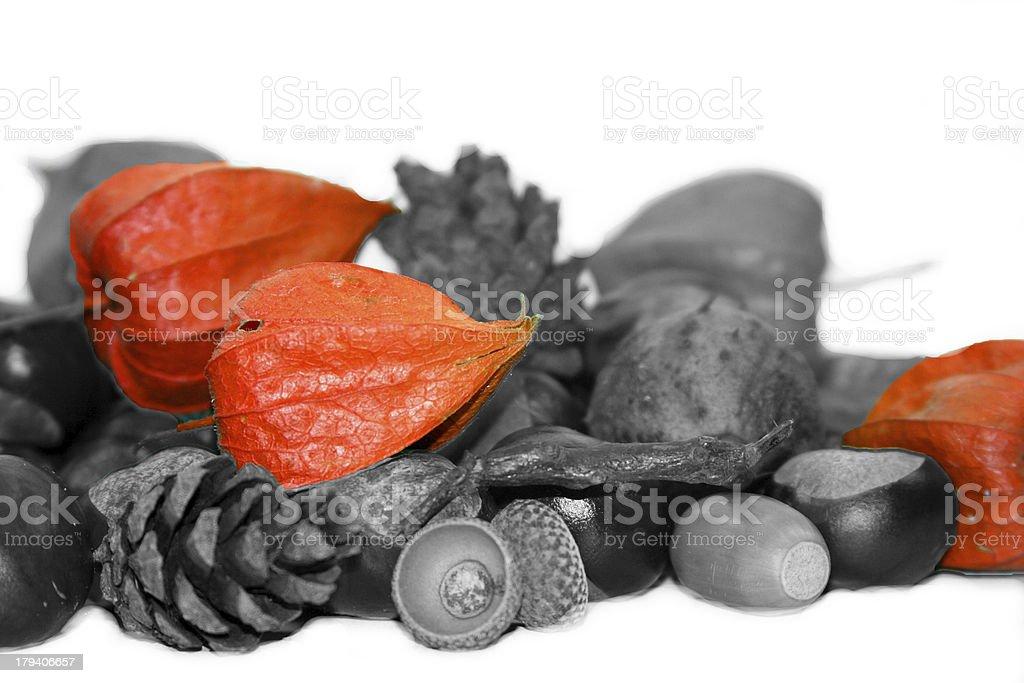 autumn decoration with chinese Lanterns, Physalis alkekengi stock photo