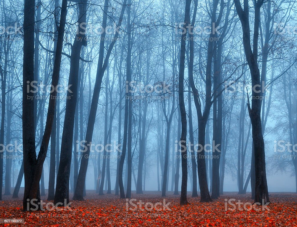 Autumn deserted park in foggy weather -autumn landscape view stock photo