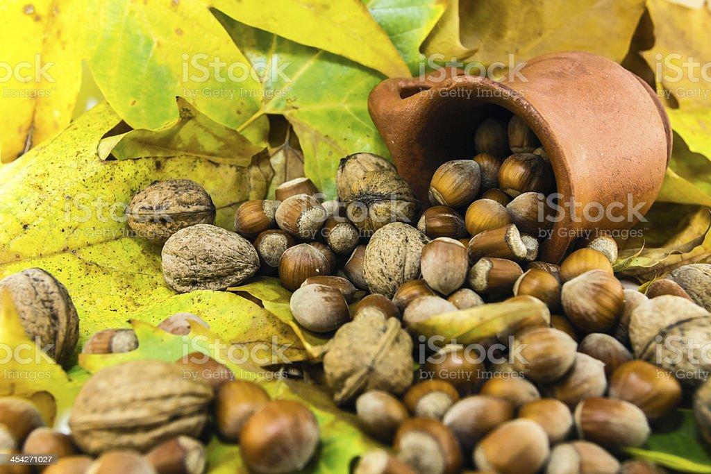 autumn detail royalty-free stock photo