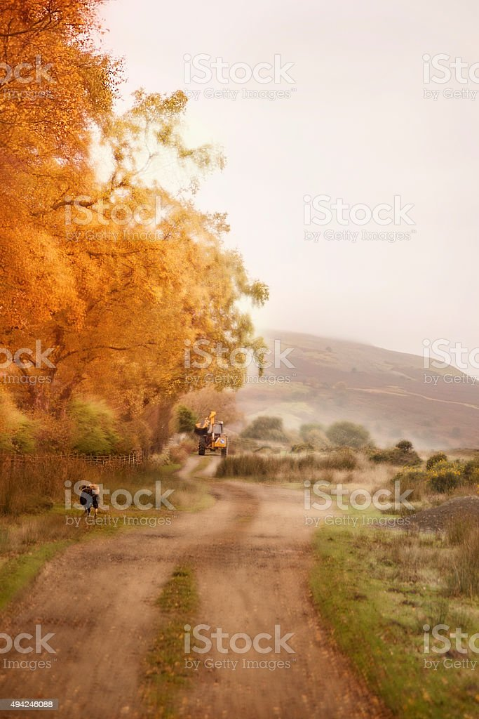 Autumn dog and tractor stock photo