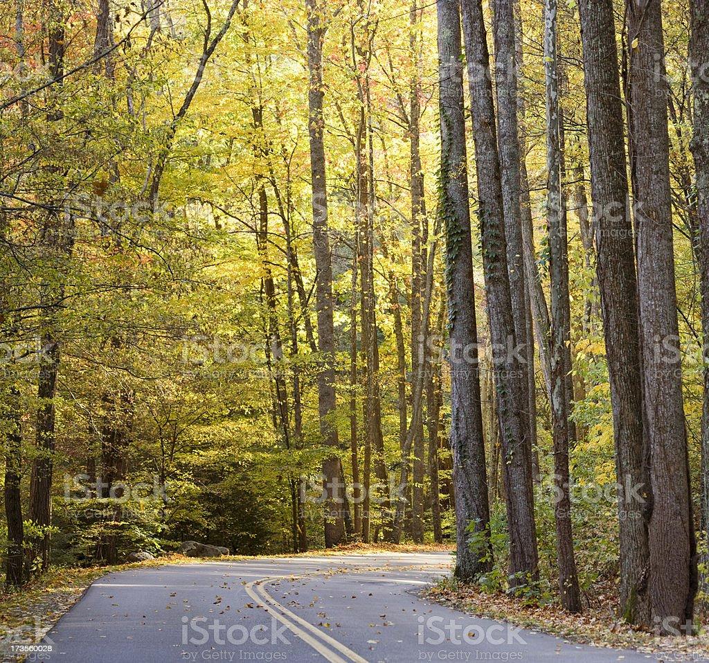 Autumn drive (XXL) royalty-free stock photo