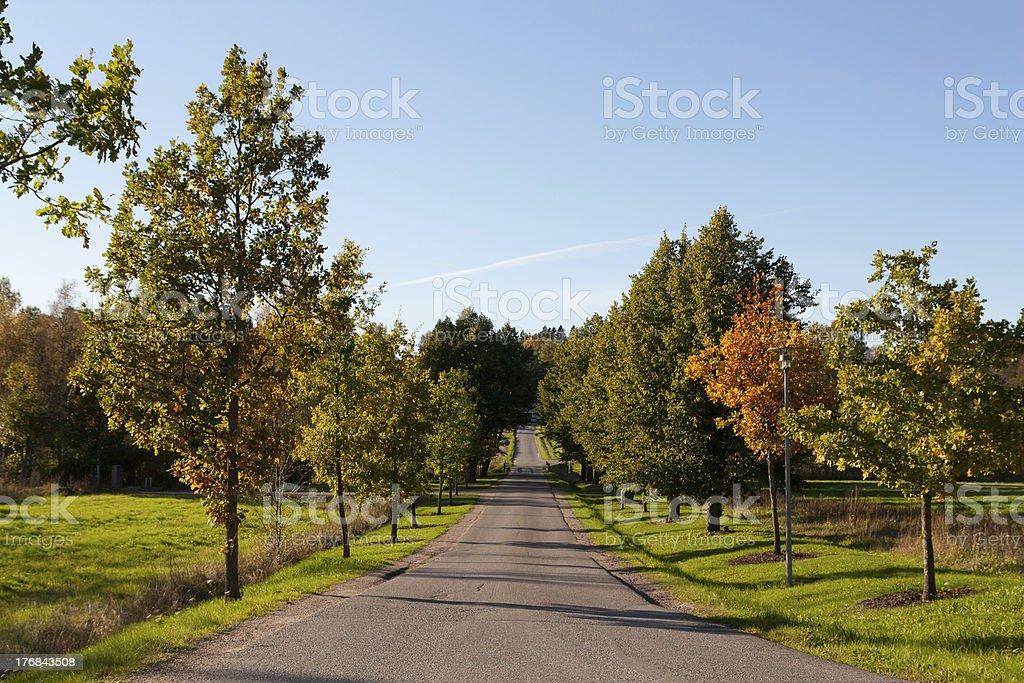 Autumn driveway stock photo