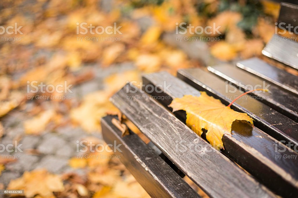 autumn dry leaf on a wooden bench in a park stock photo