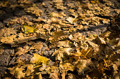autumn dry leaves on a cobbled sidewalk