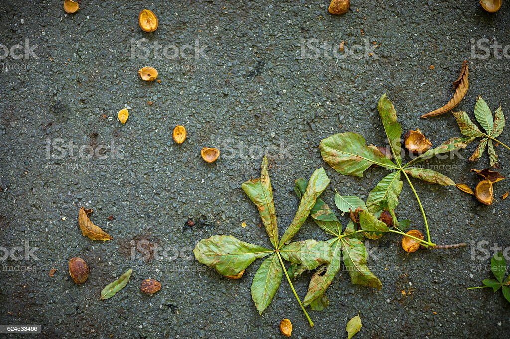 autumn dry leaves on the sidewalk stock photo