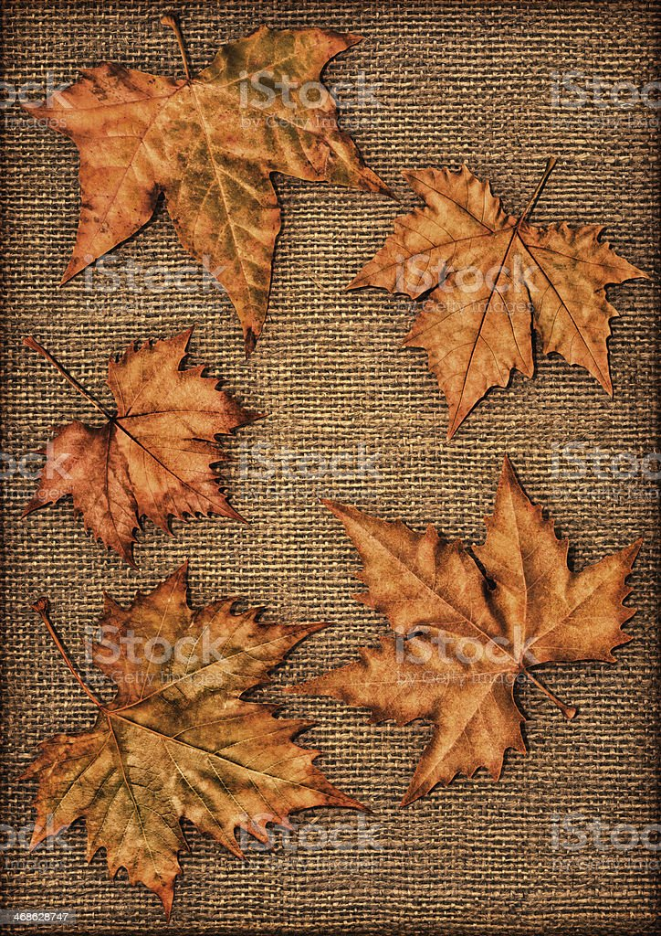 Autumn Dry Maple Leaves Isolated On Burlap Vignette Backdrop royalty-free stock photo