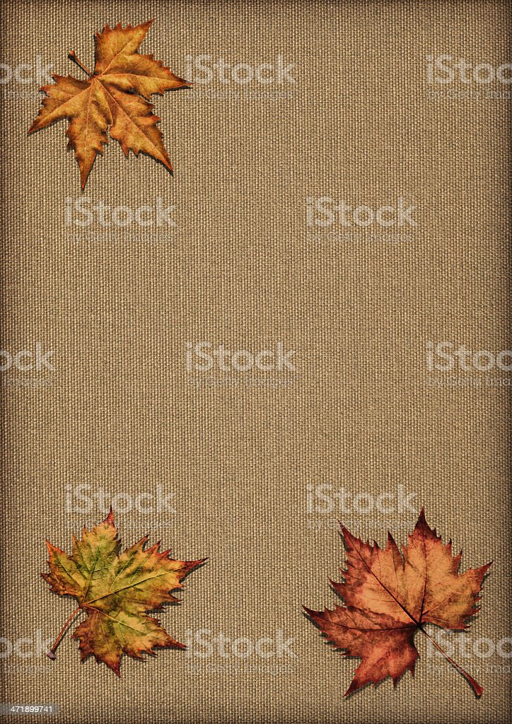Autumn Dry Maple Leaves Isolated on Unprimed Linen Canvas royalty-free stock photo