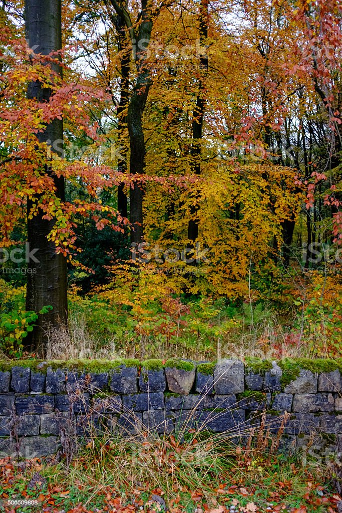 Autumn dry stone wall in portrait stock photo