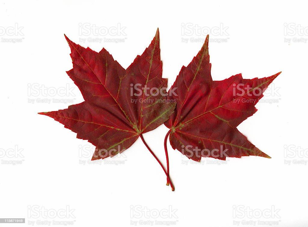Autumn Duo royalty-free stock photo