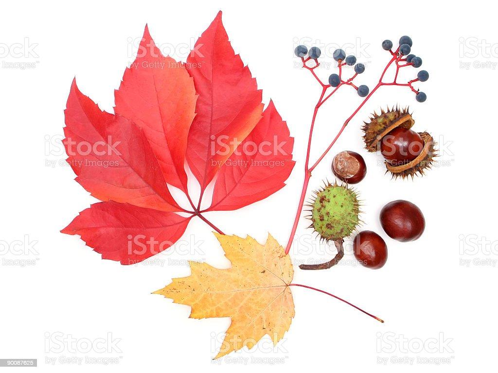 Autumn elements royalty-free stock photo