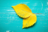 Autumn elm leafs