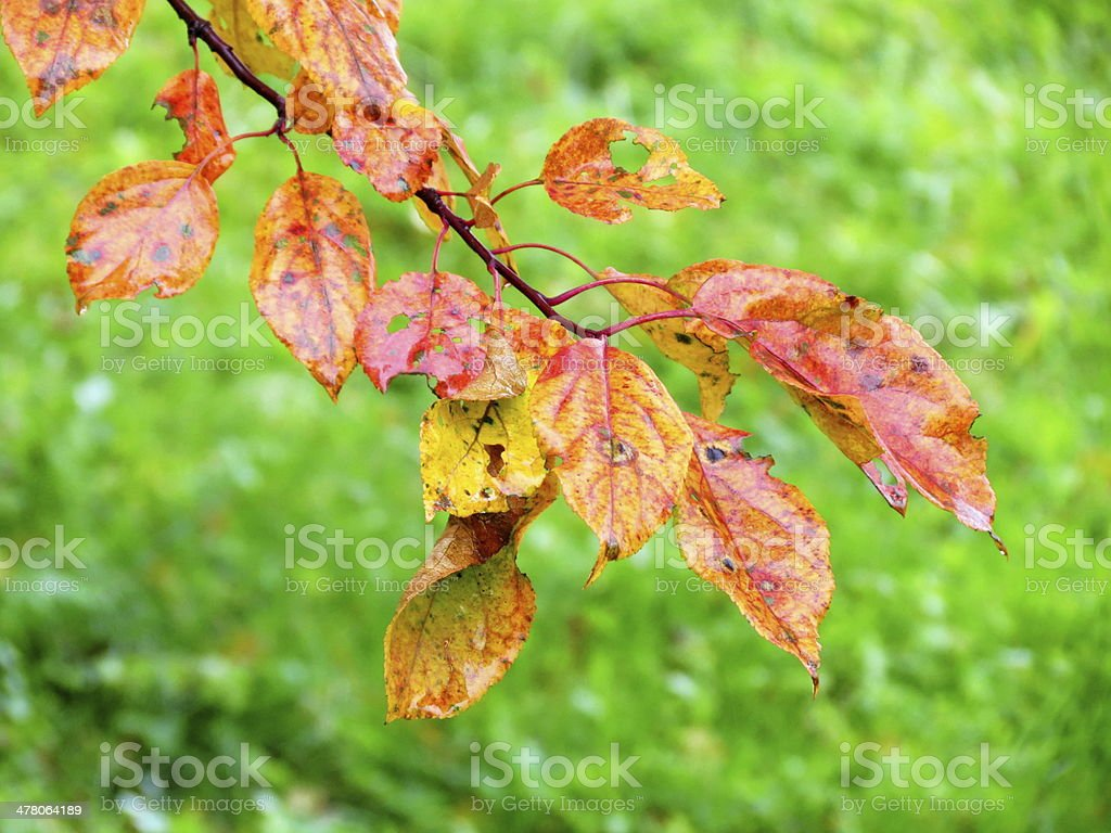 Autumn etudes royalty-free stock photo