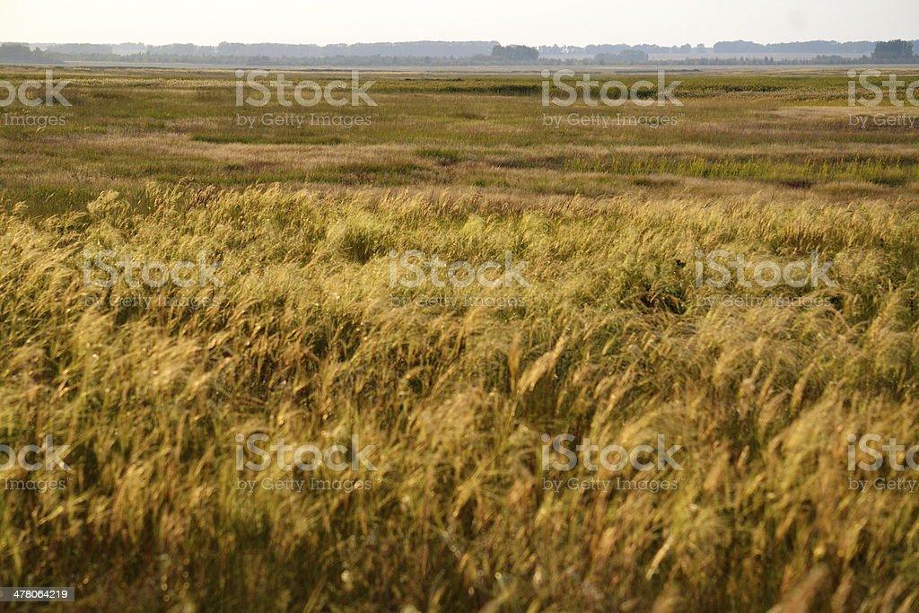 Autumn etudes royalty-free stock photo