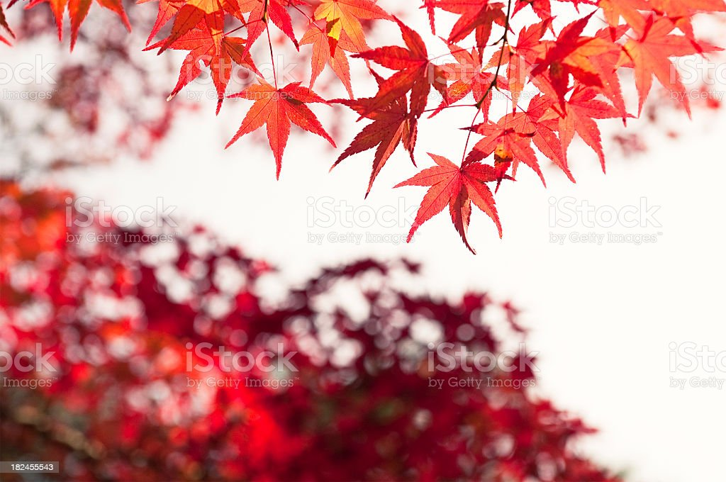 Autumn Evening royalty-free stock photo