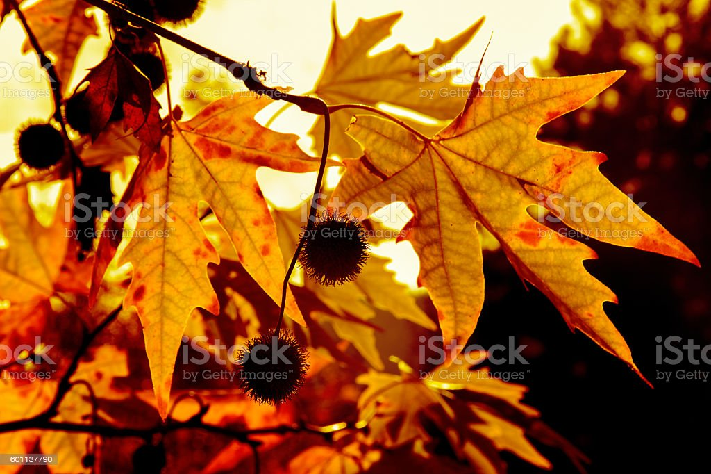 Autumn. Fall. Autumn trees and leaves in sun rays stock photo