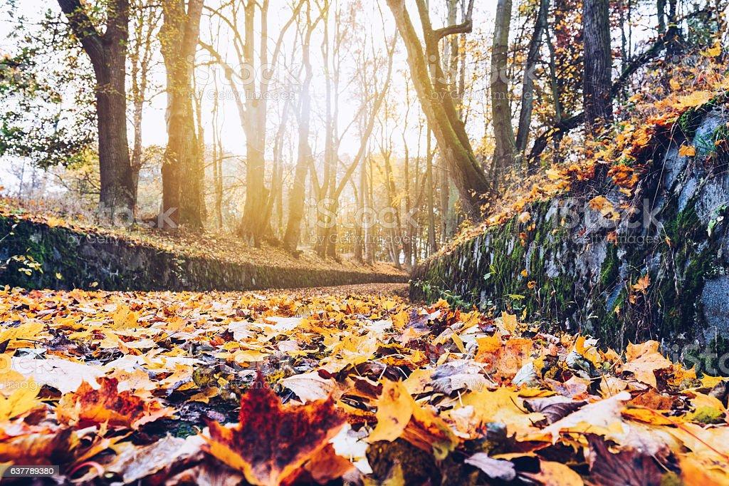 Autumn. Fall. Autumnal Park. Autumn Trees and Leaves stock photo