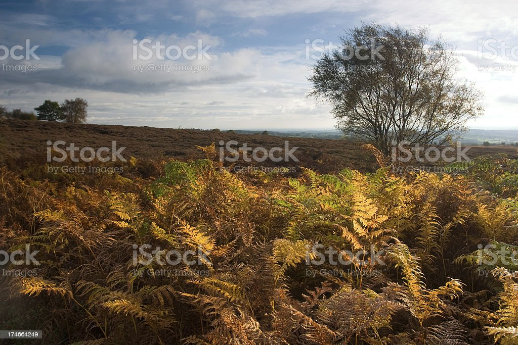 autumn fall colour in English countryside stock photo