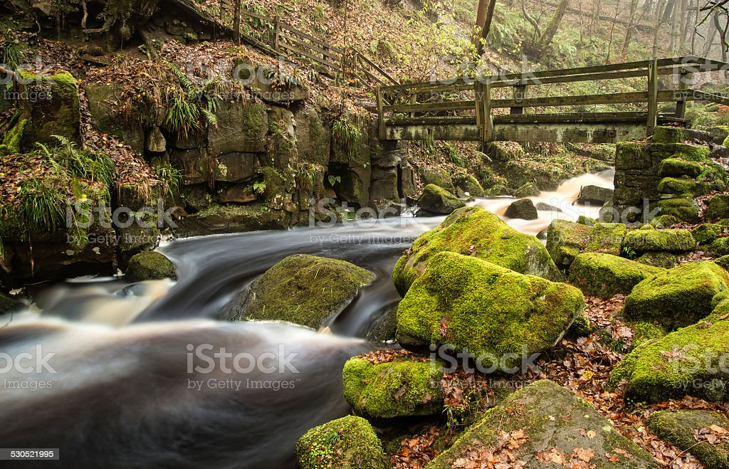 Autumn Fall forest landscape stream flowing through golden vibra stock photo