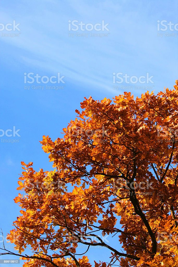 Autumn fall landscape - trees in forest stock photo