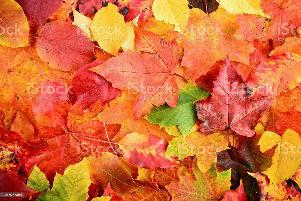 Autumn Fall leaves background stock photo