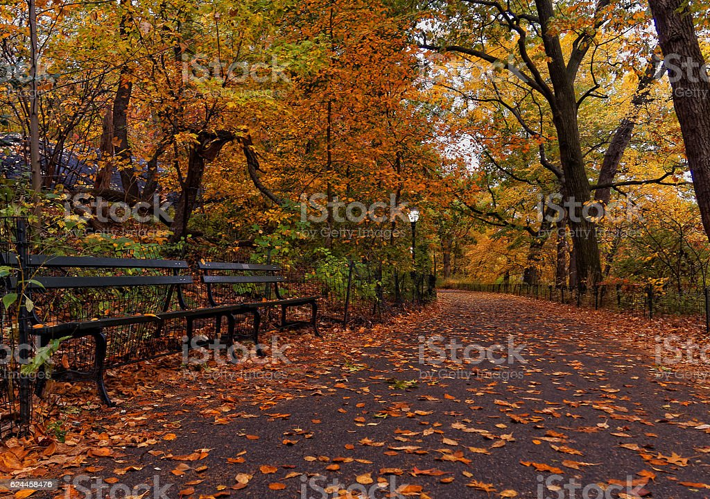 Autumn Fall Leaves in Central Park New York City stock photo