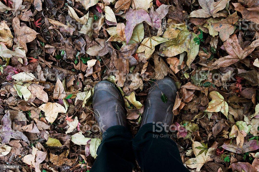Autumn fall maple leaves stock photo