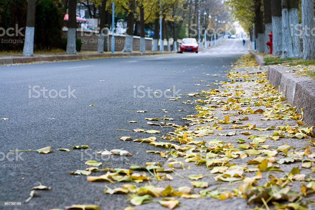 autumn fall road of the city royalty-free stock photo