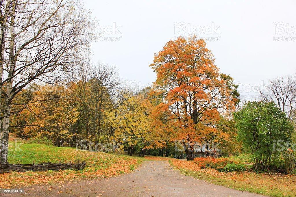 Autumn fall season city park alley stock photo